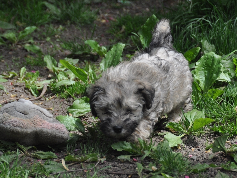 2012-04-29-buddy-jr-dsc_0022-cropped