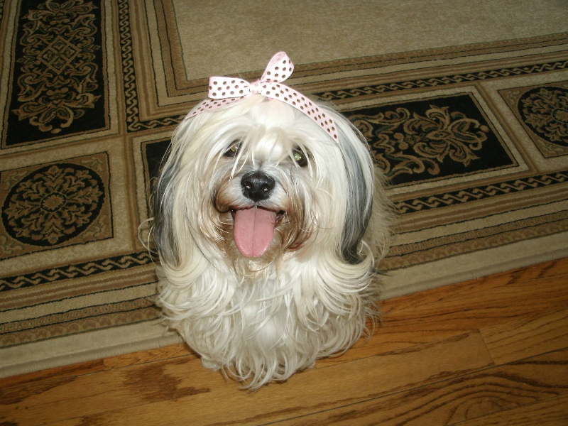 2014-05-30-pepper-and-her-pretty-bow