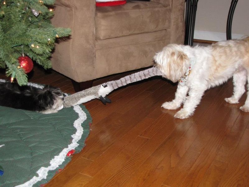 2012-12-25-pixie-on-christmas-day-23