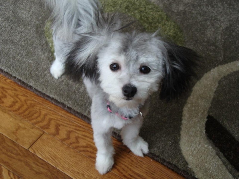 2013-03-09-pixie-after-1st-haircut-04