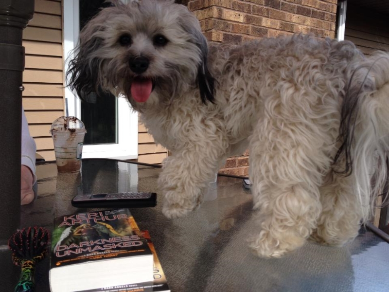 2014-05-12-fergus-laying-on-picnic-table-02