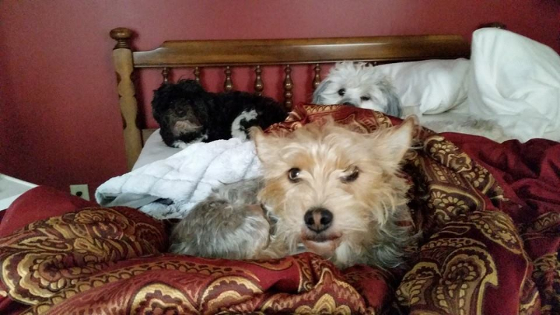 2014-11-15-fergus-in-bed-with-his-dog-siblings