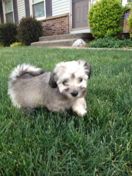 2013-05-20-tessa-playing-in-the-grass