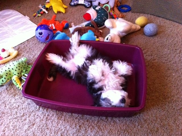 2013-09-07-mabel-laying-in-toy-box-01