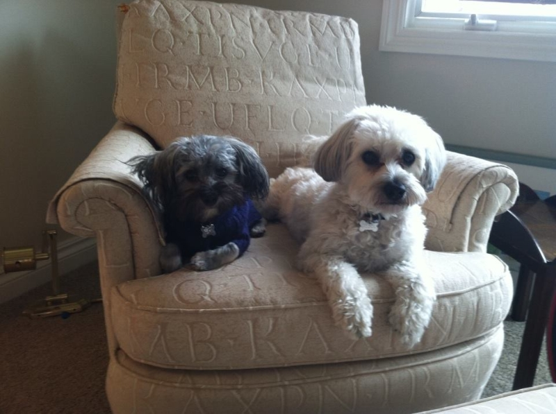 2014-04-28-bean-and-diesel-sitting-together-in-the-chair